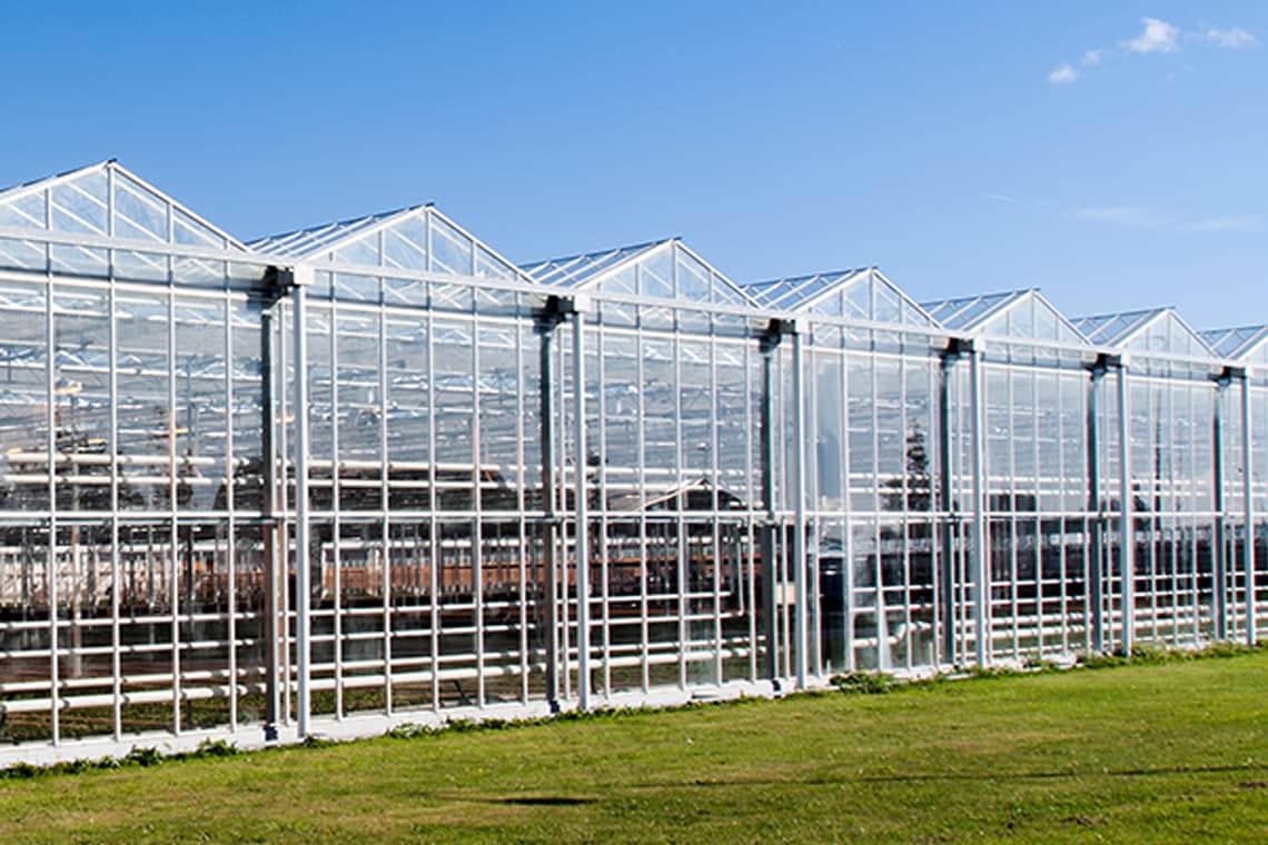 Subsidie Beschikbaar Voor De Glastuinbouw Investeerders
